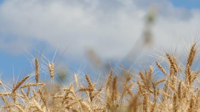 Weizenanbau in Zentralspanien