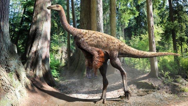 Befiederung des Ornithomimus mit nacktem Hinterteil