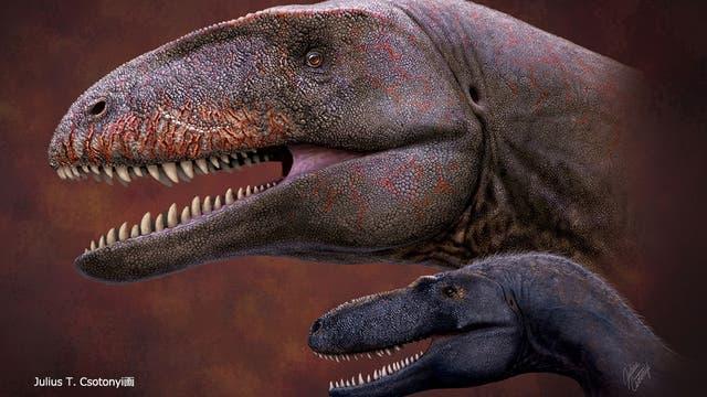 Raubsaurier im Vergleich