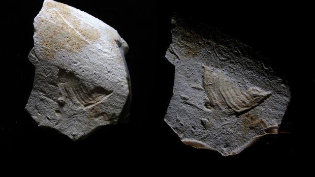 Steinzeit-Relief des Twittervogels