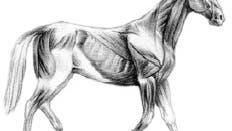 Falscher Pferdegang