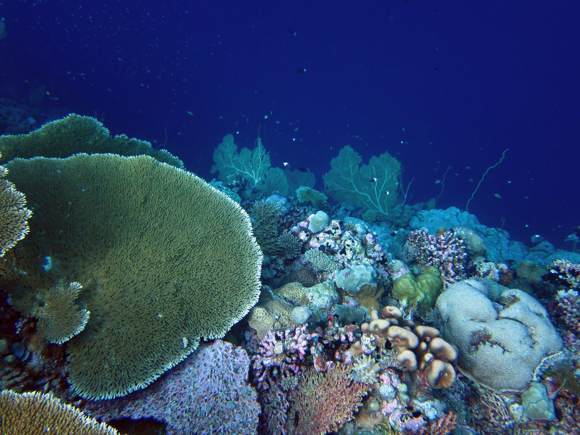 Korallenriff vor den Chagos-Inseln