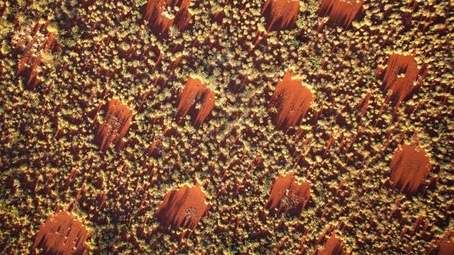 Die Feenkreise: regelmäßig kreisrunde Lücken im westaustralischen Grasland