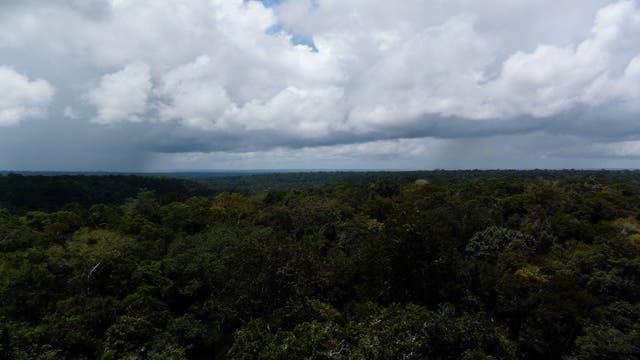 Regenwolken über dem Regenwald
