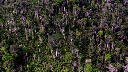 Regenwald mit Lückenschlag