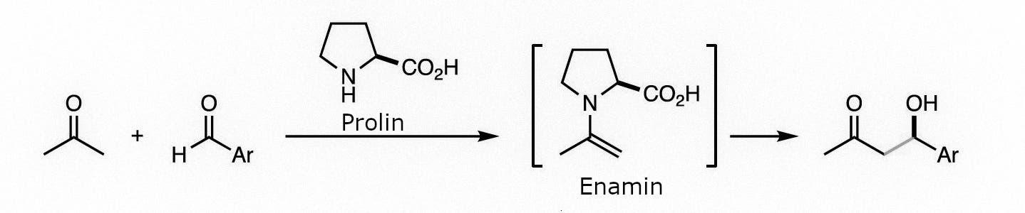 Prolin bildet mit einem an der Reaktion beteiligten Molekül ein so genanntes Enamin.
