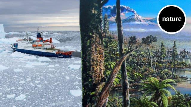 Unter der Antarktis lag einst ein Regenwald