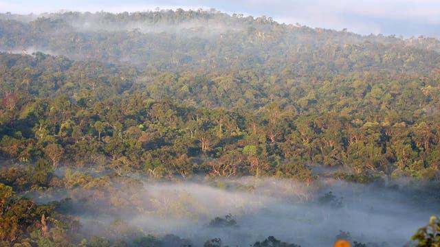 Wald auf Peleng