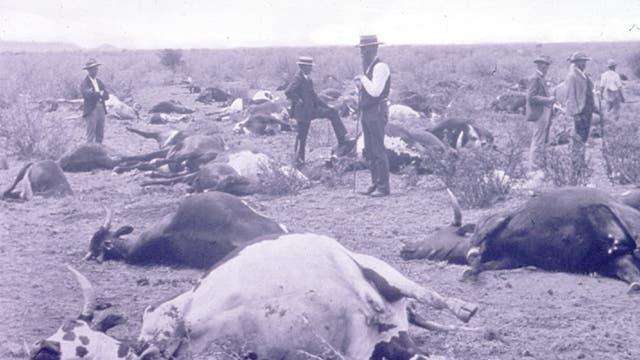 Rinderpest in Südafrika 1896