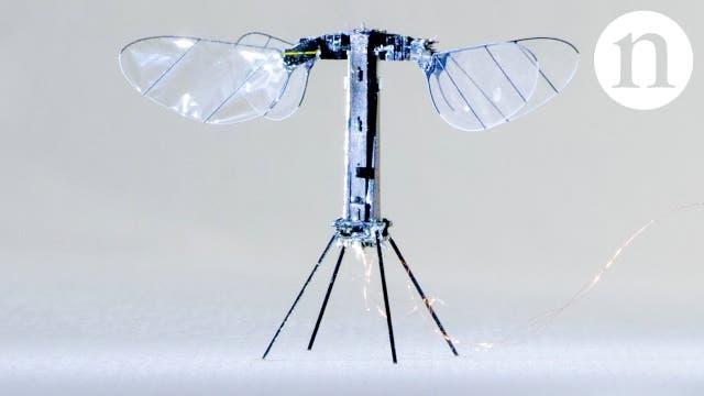 Robo Bee X-Wing: Die Zukunft der Insekten-Roboter?