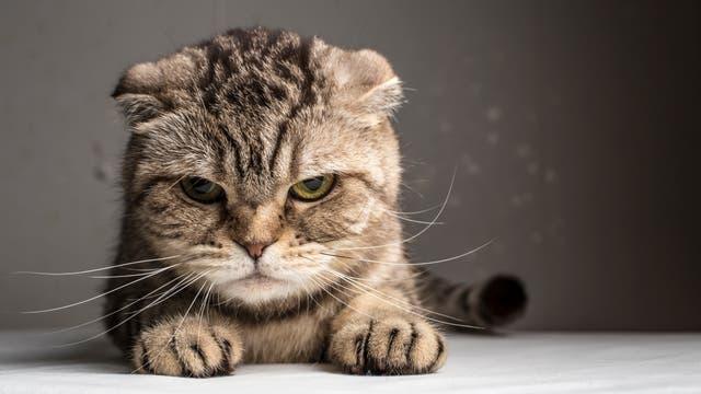 Katzen können auch schlechte Laune haben