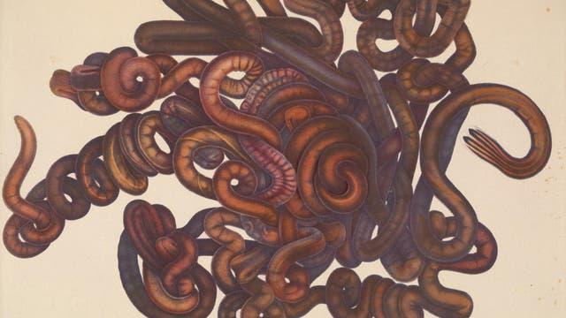 Dies ist ein Schnurwurm. Ja, nur einer.