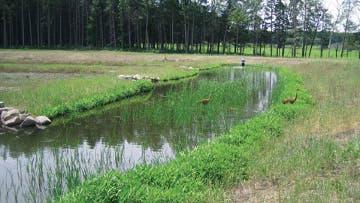 experimentelles Feuchtgebiet an der University of Wisconsin in Madison aus Regenwasser entstanden