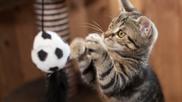 Eine Katze spielt mit einem Ball