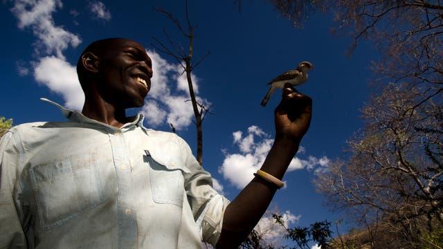Der Dorfbewohner Orlando Yassene mit einem Honiganzeiger in Mosambik.