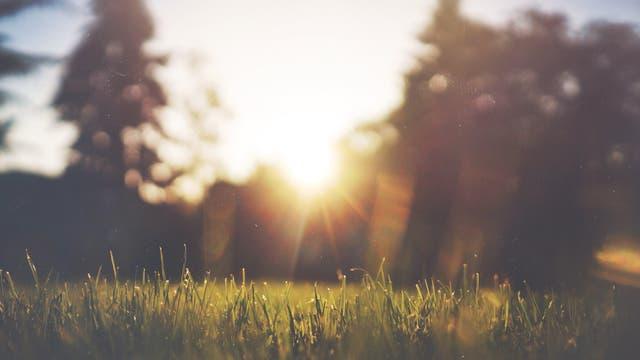 Sonnenstrahlen über Gras in einem Park