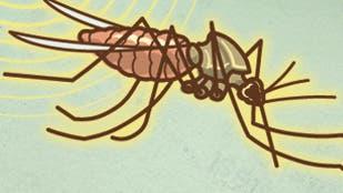 Malaria Mücke