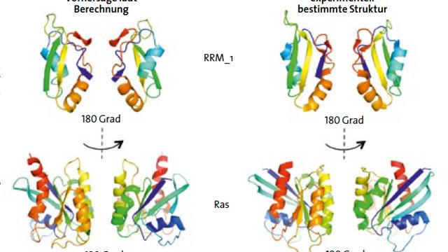 Proteinstrukturen