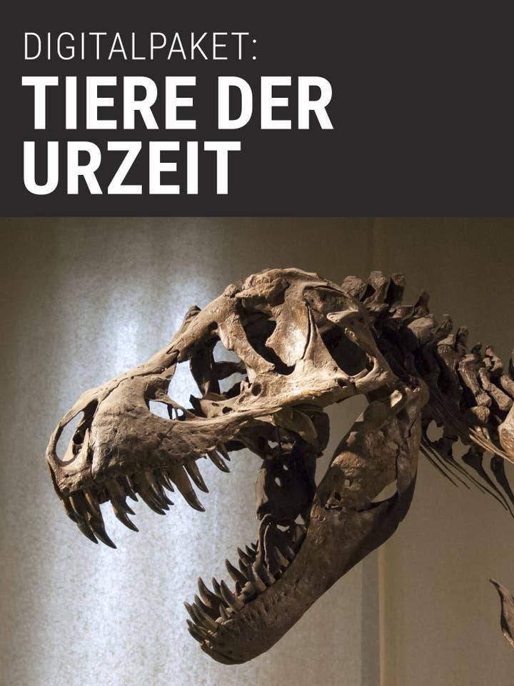 Digitalpaket: Tiere der Urzeit_Teaser