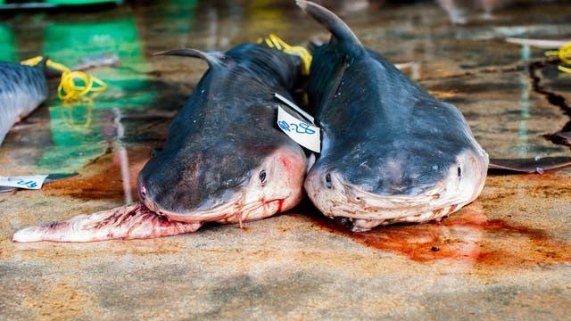 Tote Haie auf dem Markt