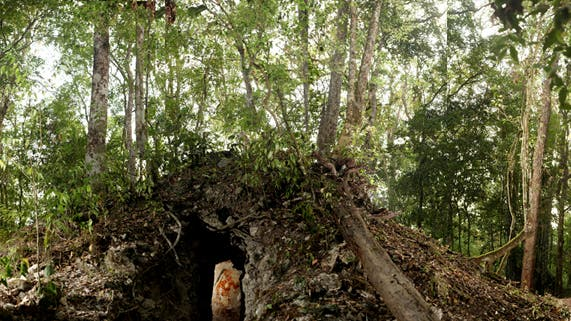 Früheste astronomische Aufzeichnungen der Maya entdeckt