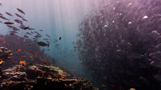 Starkes Unterwasser-Verkehrsaufkommen