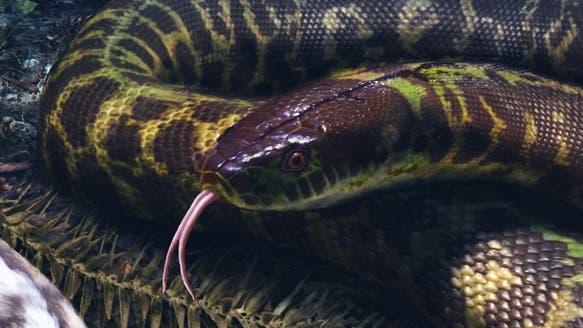 Urahn aller Schlangen