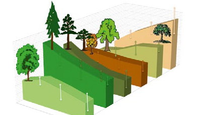 Wald-Management