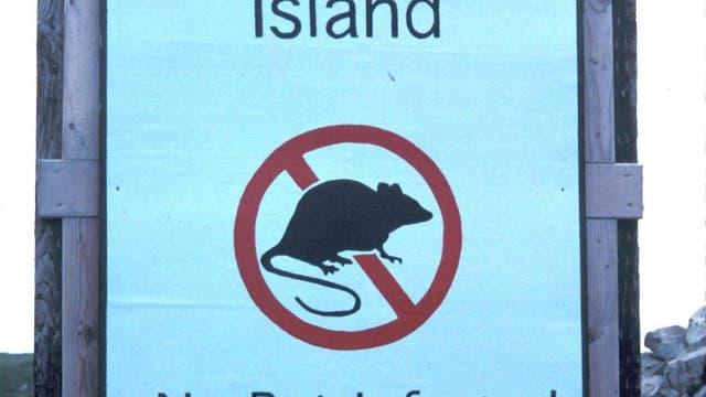 Ratten verboten!