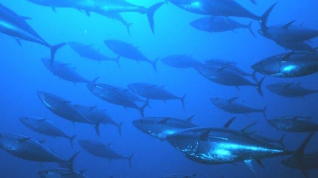 Tunfische