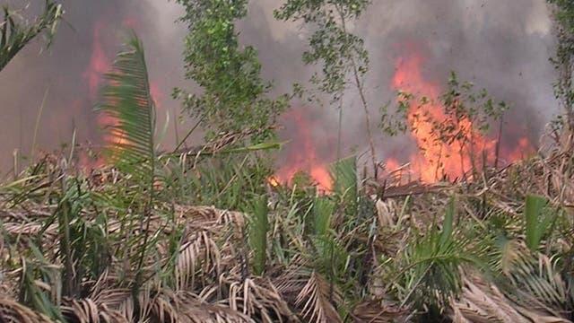 Brennendes Moor in Indonesien