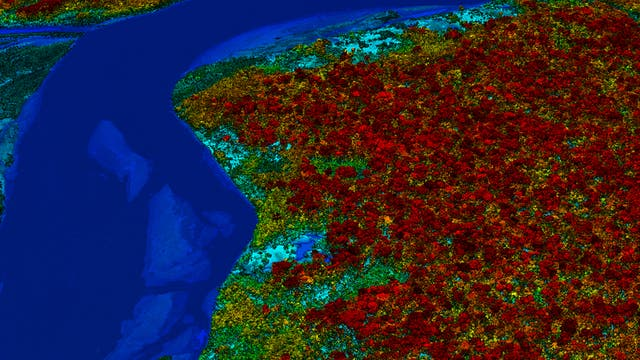 Regenwald in Spektralfarben