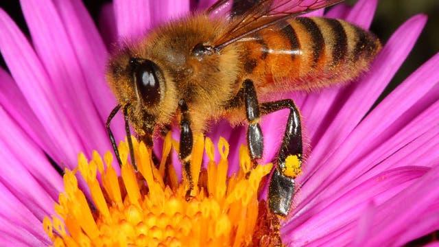 Werbebild Biene