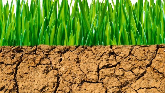 Frisches Grün sprießt auf trockenem Boden