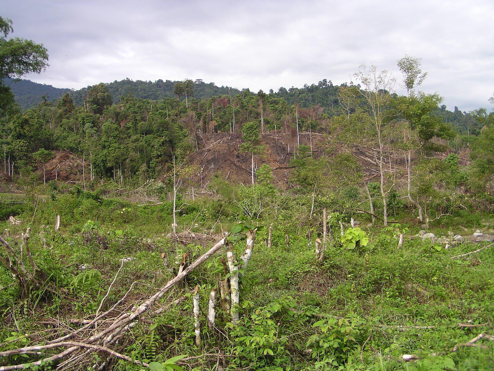 Zerstörter Regenwald auf Sumatra