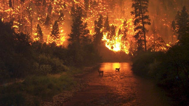 Waldbrand in Montana