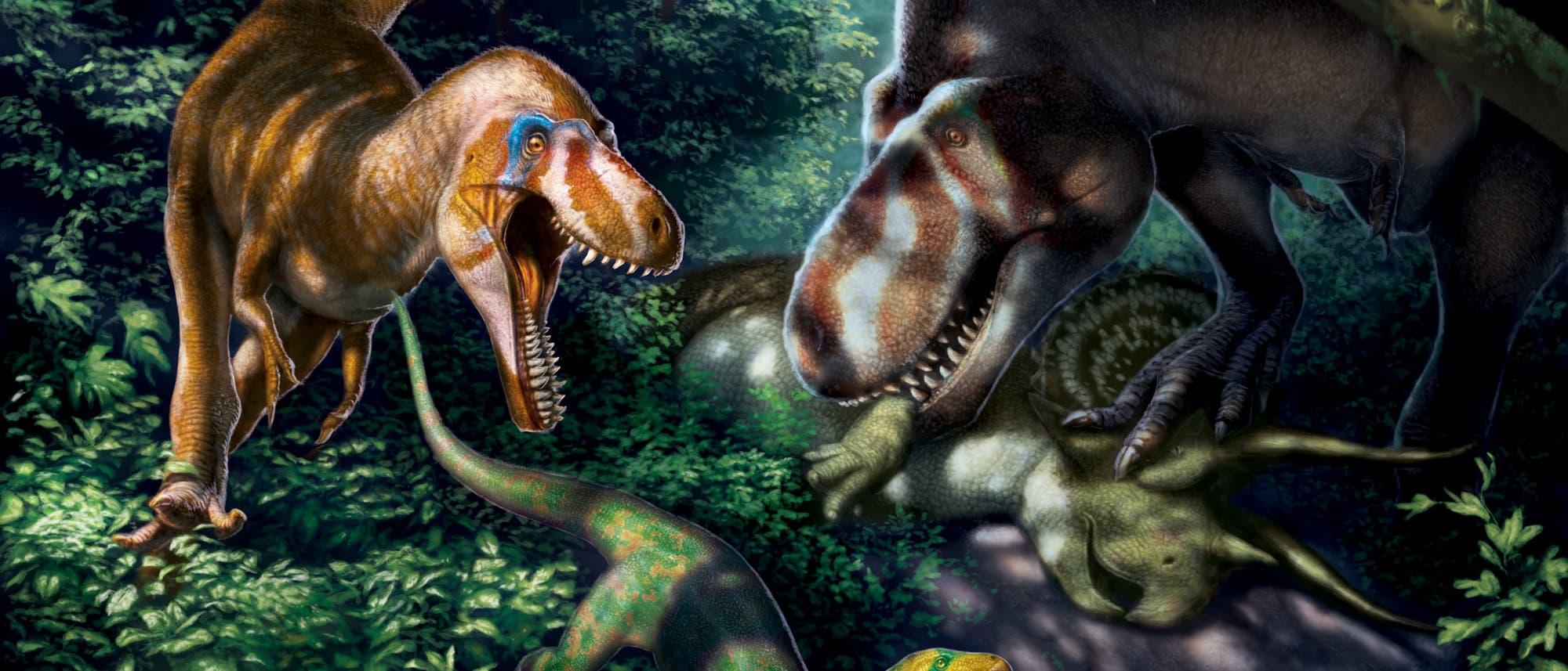 Schlank, leichtfüßig, messerscharfe Zähne - so könnten die Jungtiere von Tyrannosaurus rex ausgesehen haben.