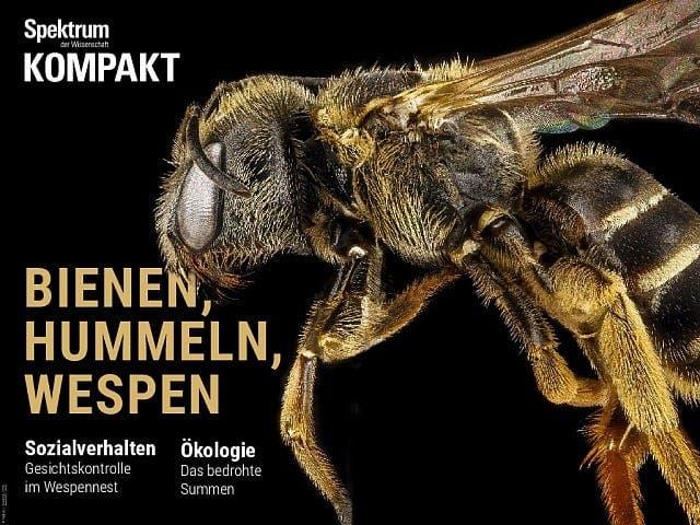 Spektrum Kompakt:  Bienen, Hummeln, Wespen – Sechsbeiner mit Charakter