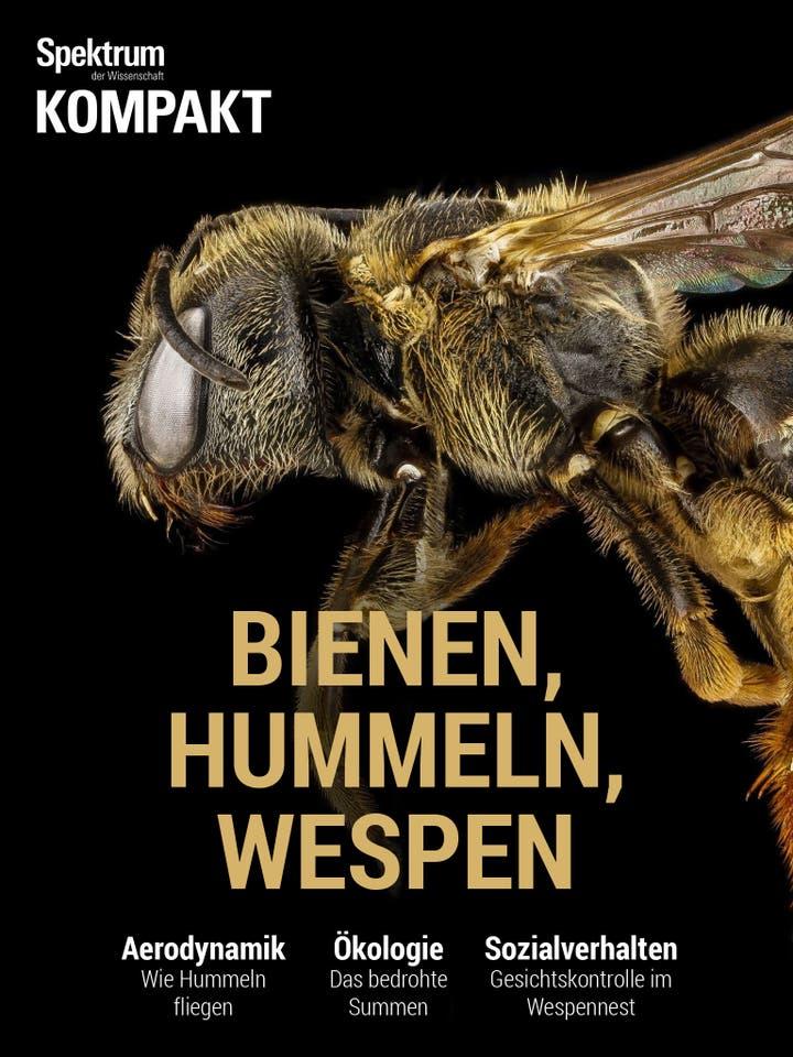 Bienen, Hummeln, Wespen - Sechsbeiner mit Charakter
