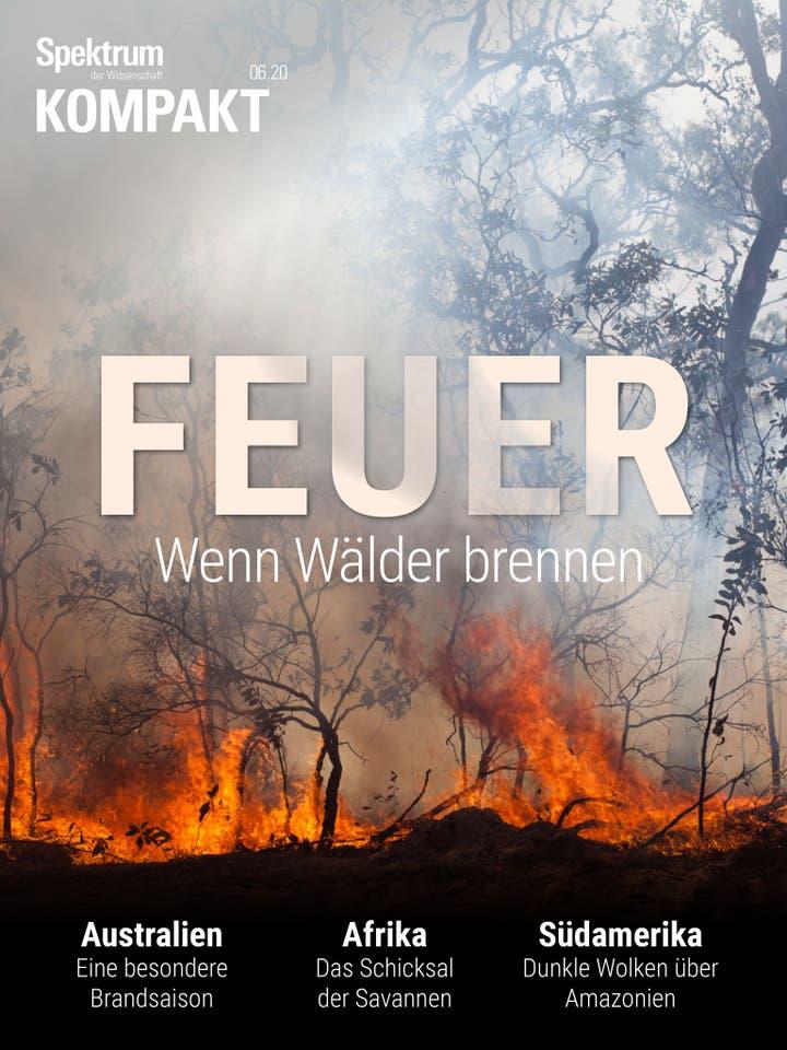 Feuer – Wenn Wälder brennen