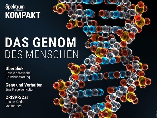 Spektrum Kompakt:  Das Genom des Menschen