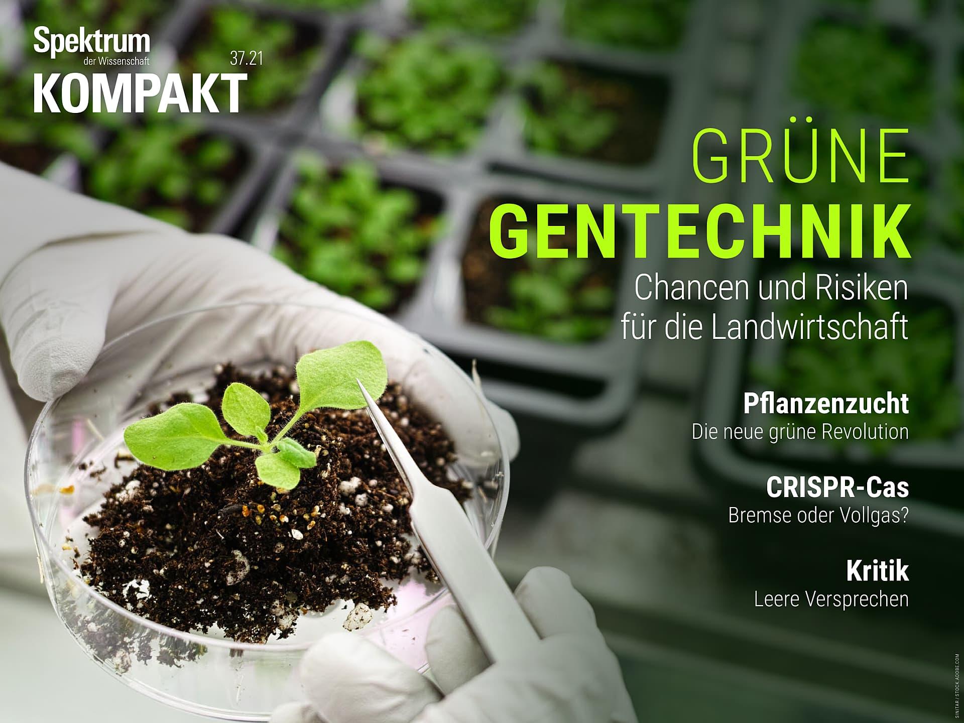 Grüne Gentechnik - Chancen und Risiken für die Landwirtschaft