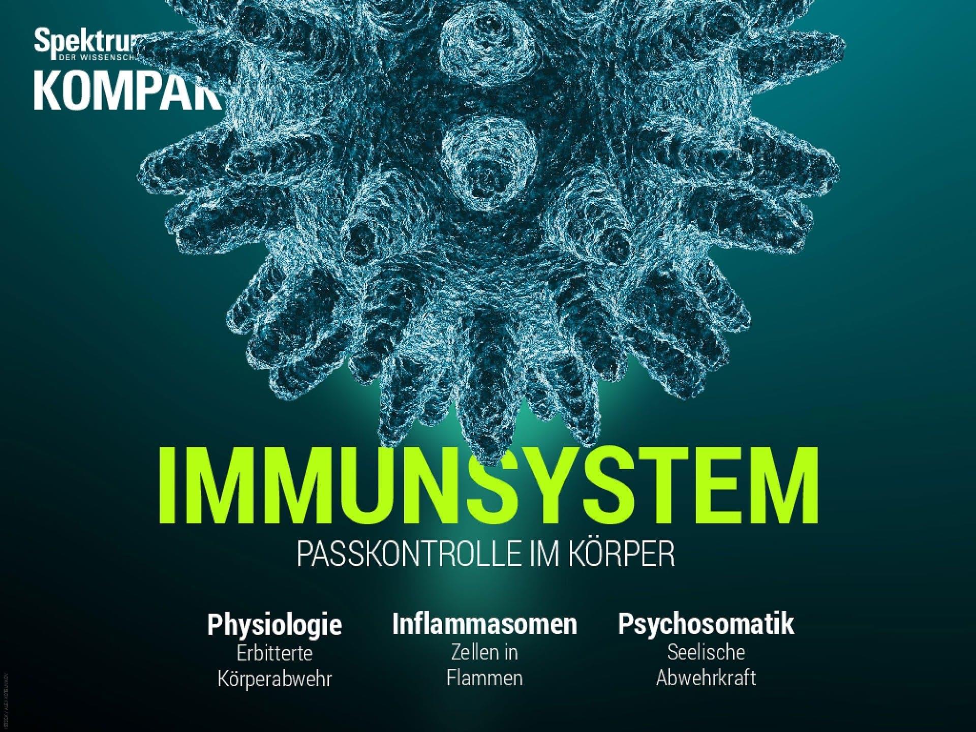 Immunsystem - Passkontrolle im Körper