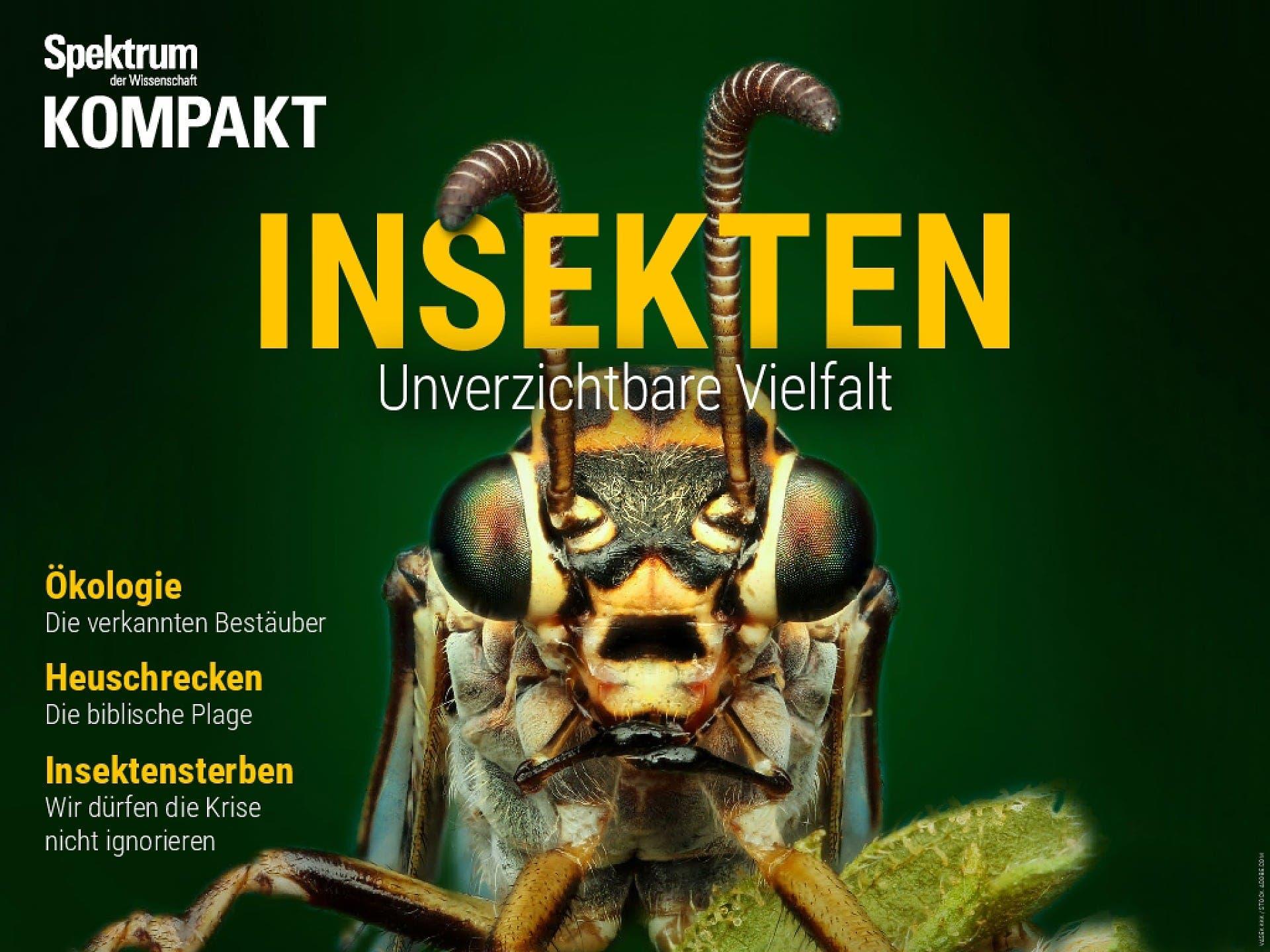 Insekten - Unverzichtbare Vielfalt