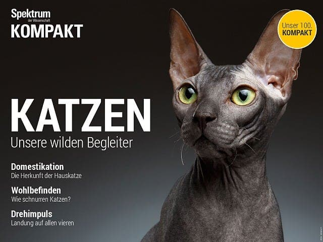 Spektrum Kompakt:  Katzen – Unsere wilden Begleiter