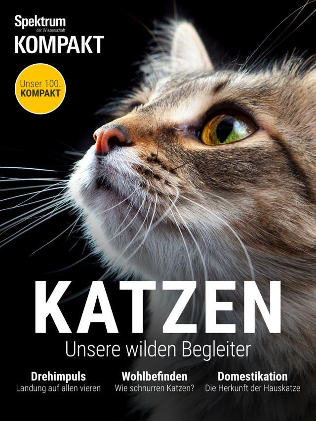 Katzen - Unsere wilden Begleiter