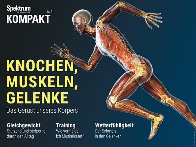 Spektrum Kompakt:  Knochen, Muskeln, Gelenke – Das Gerüst unseres Körpers