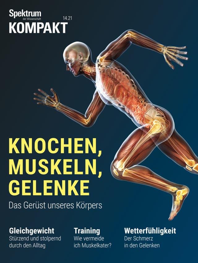 Knochen, Muskeln, Gelenke - Das Gerüst unseres Körpers