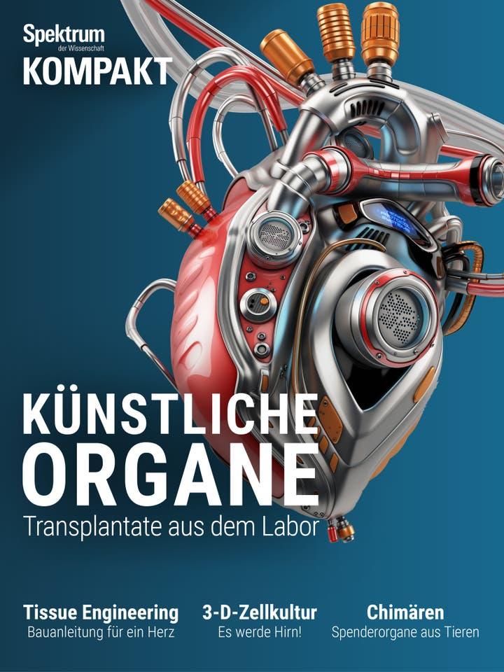 Künstliche Organe - Transplantate aus dem Labor