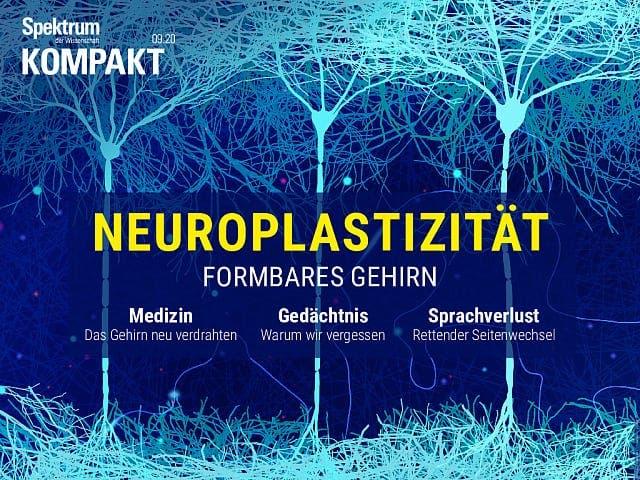Spektrum Kompakt:  Neuroplastizität – Formbares Gehirn